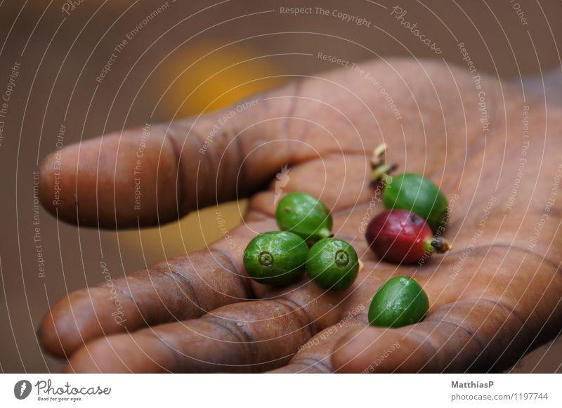 Rohe Kaffeebohnen in der Hand Natur Pflanze grün Baum Erholung Tier Leben Lifestyle Feste & Feiern Lebensmittel Stimmung Kraft Ernährung genießen gut