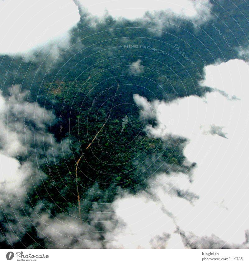 Kamerun von oben I weiß grün Wolken Wald Straße Freiheit Landschaft Flugzeug Luftverkehr Sehnsucht Afrika Urwald tief Vogelperspektive