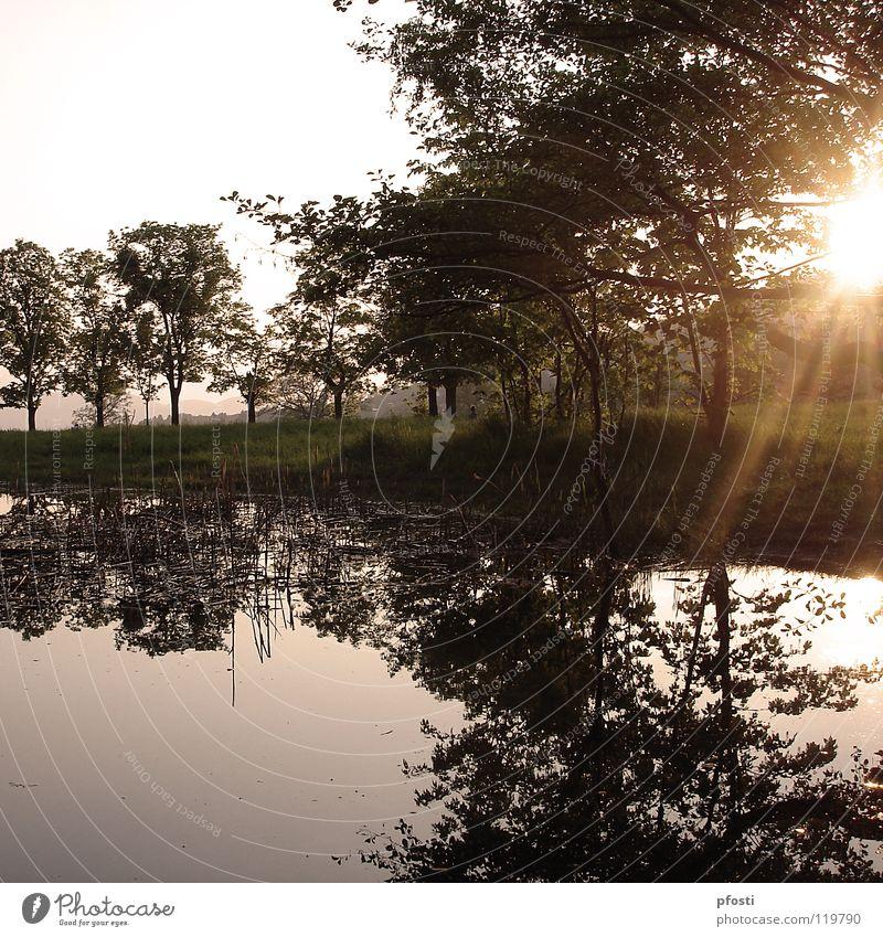 ...und morgen komme ich wieder Teich See Gewässer Wiese Sonnenstrahlen Sonnenuntergang Sonnenlicht Dämmerung Licht Baum Reflexion & Spiegelung Außenaufnahme