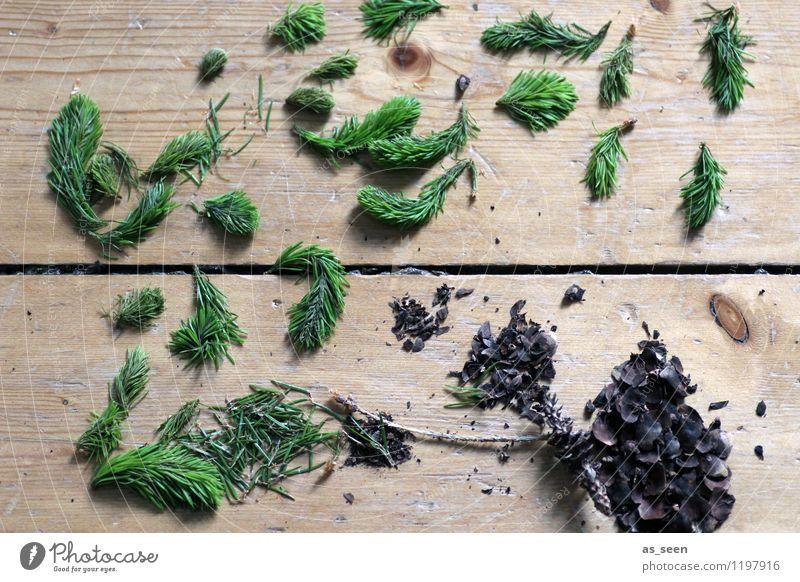 Von drauß´ vom Walde ... Natur Pflanze Weihnachten & Advent grün Baum Landschaft Umwelt Frühling Gesundheit Holz braun liegen Design Freizeit & Hobby Ordnung