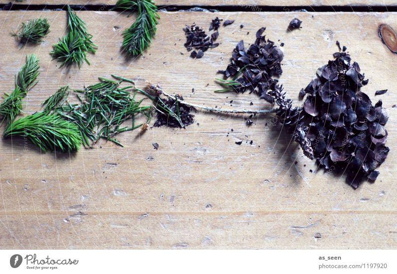Im Wald Alternativmedizin Wellness harmonisch Wohlgefühl Spielen Ferien & Urlaub & Reisen Berge u. Gebirge wandern Natur Pflanze Fichte Tanne Zapfen Tannennadel