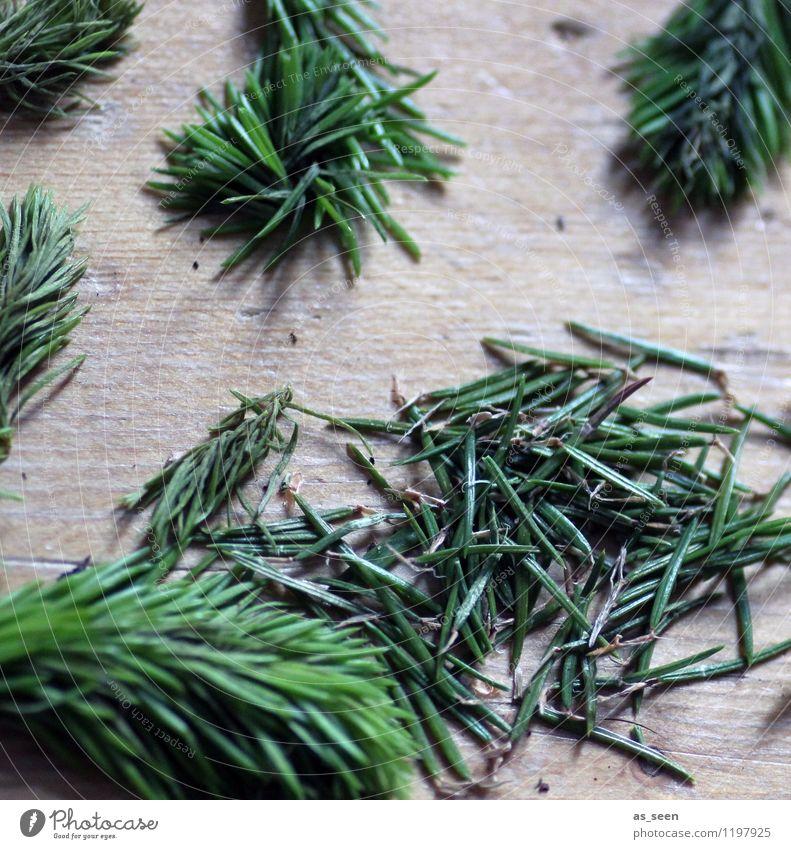 Fichtennadelduft schön Wellness harmonisch ruhig Duft Kur Frühling Sommer Winter Pflanze Baum Tannennadel Tannenzweig Wald Holz liegen authentisch natürlich