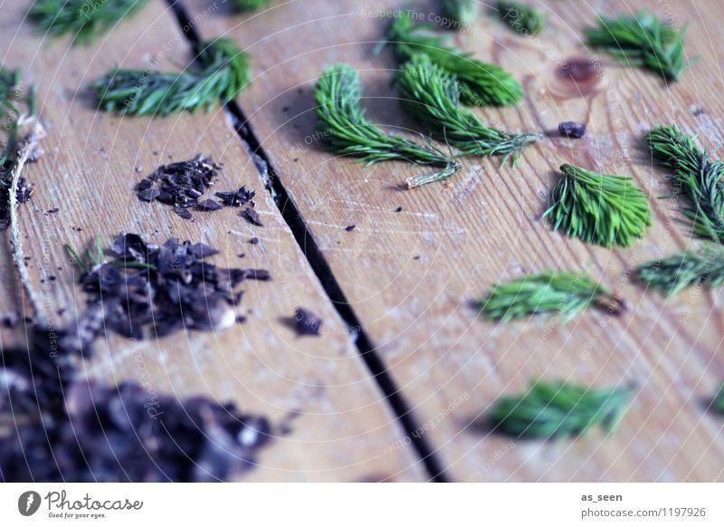 Nadelsammlung Natur Pflanze Weihnachten & Advent grün Sommer Baum ruhig Winter Wald Berge u. Gebirge Umwelt Spielen Holz braun liegen Freizeit & Hobby