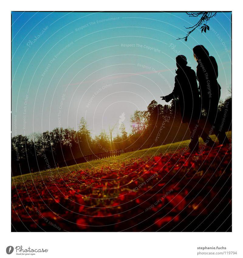Novembertag Sonne Blatt Herbst analog Stuttgart