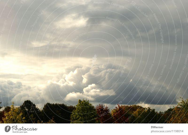 Natur Ferne Freiheit Umwelt Landschaft Himmel Wolken Gewitterwolken schlechtes Wetter Unwetter Baum Wald Gipfel bedrohlich dunkel grau Traurigkeit Erschöpfung