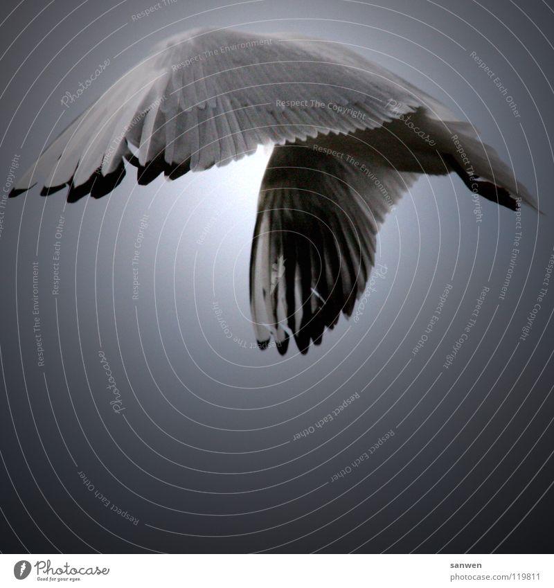 blindflug Himmel weiß Sonne schwarz Wolken Einsamkeit Tier grau Beine Vogel fliegen Luftverkehr Feder Flügel Bauch verstecken