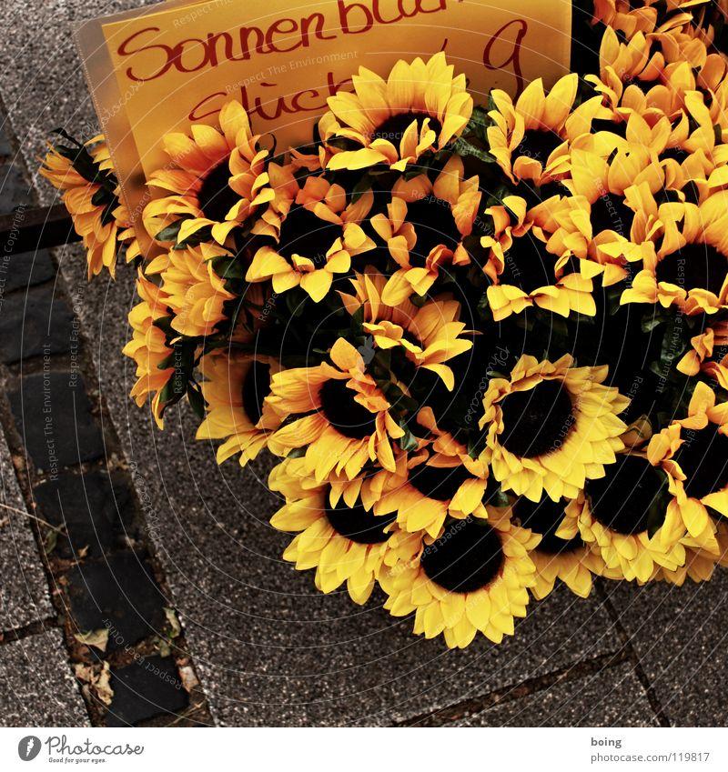 Sonnenblume fürs Knopfloch Blume Sommer gelb stehen Dekoration & Verzierung Blühend Blumenstrauß Handel Sonnenblume Verabredung Raps Hamburg Marktstand verblüht Blumenhändler Muttertag