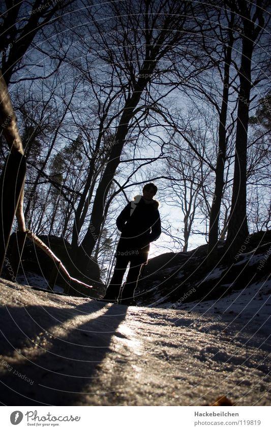 sunlight Mensch Baum Sonne Winter Wald dunkel Schnee Eis glänzend Geländer Glätte blenden Sächsische Schweiz