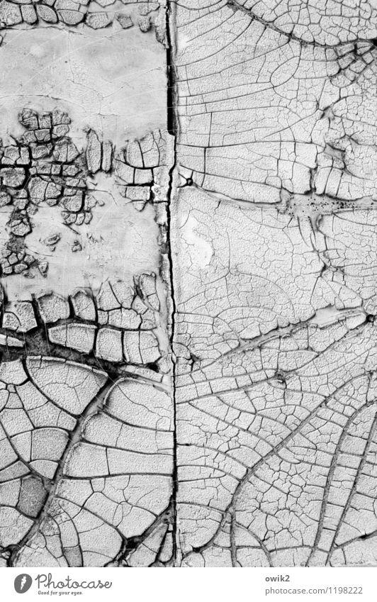 Wurzelwerk Mauer Wand Fassade alt dehydrieren Verfall Vergänglichkeit Zerstörung Riss Zahn der Zeit Teile u. Stücke Fragmente verfallen Schaden Schwarzweißfoto