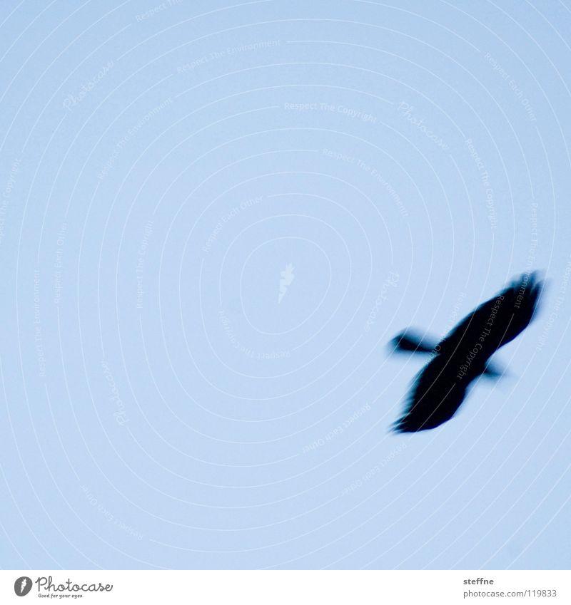 Ich bin dann mal weg ... Vogel Luft Schweben fliegen fliegend Vogelflug Silhouette Vor hellem Hintergrund Freisteller Textfreiraum oben Textfreiraum Mitte