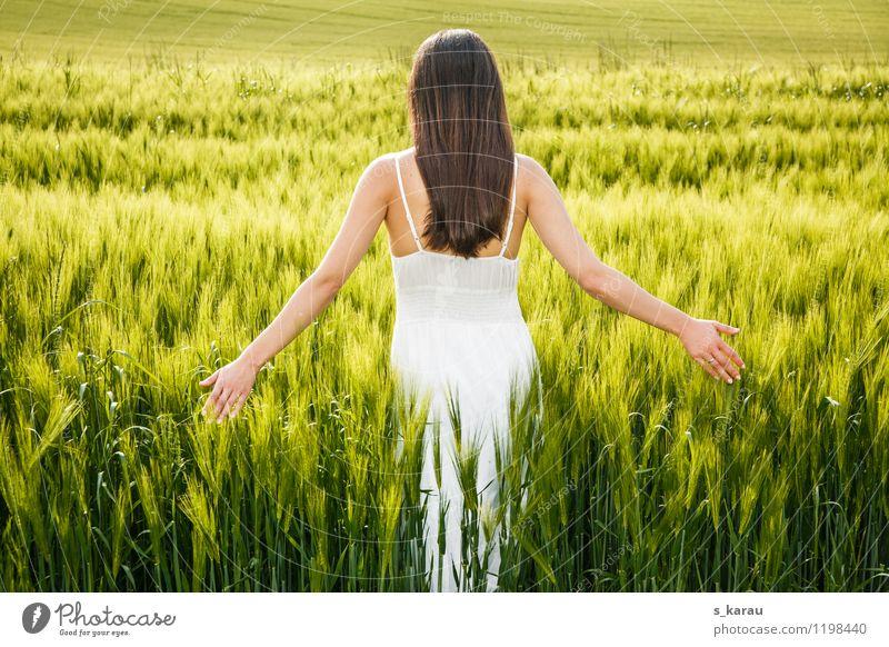 Abendsonne Getreide Allergie Sommer feminin Frau Erwachsene Körper Haare & Frisuren 1 Mensch 18-30 Jahre Jugendliche Natur Frühling Nutzpflanze Feld Dorf