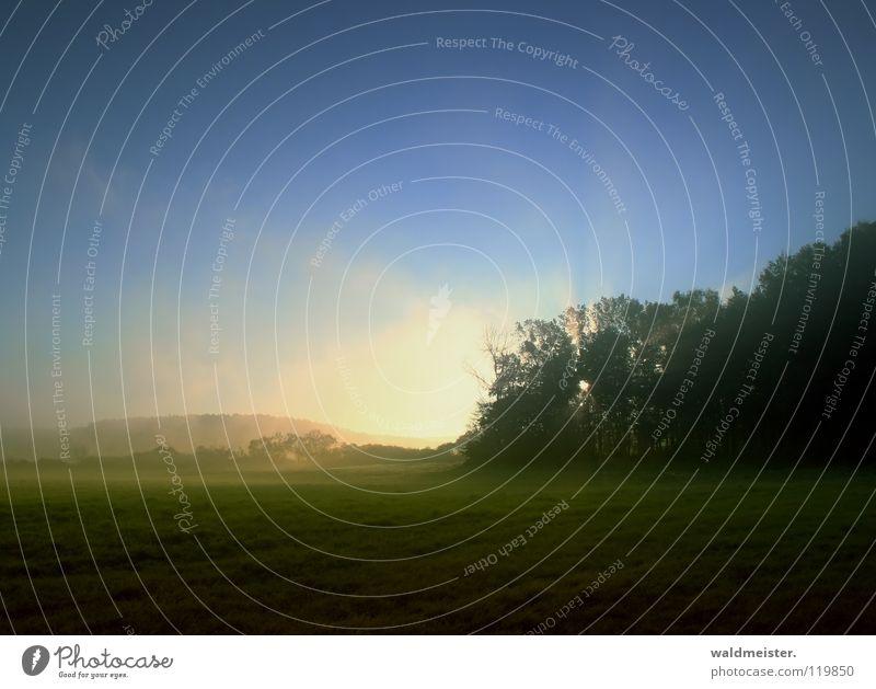 Morgensonne Nebel Wiese Baum Wald Morgennebel Wolken Romantik Hoffnung Sonne Morgendämmerung Bodeninversion Müritz-Nationalpark Traurigkeit