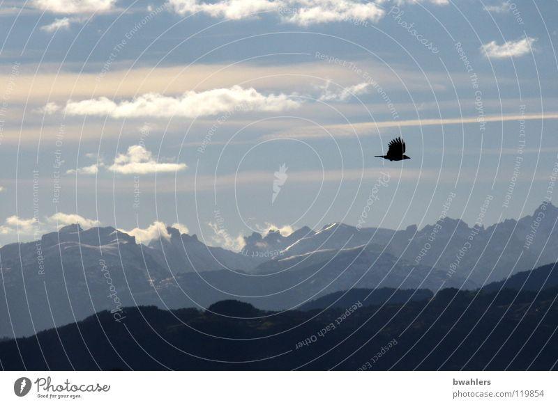 Fernweh Himmel Wolken Ferne Berge u. Gebirge Freiheit See Stimmung Vogel fliegen Alpen Bodensee