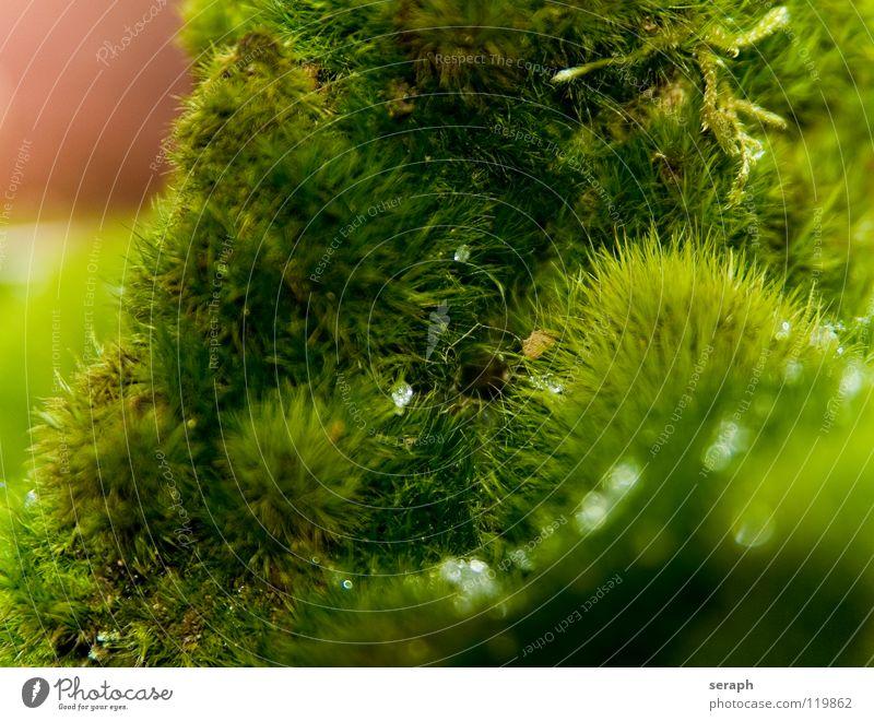 Mooswelt Natur Pflanze grün Hintergrundbild Wachstum Wassertropfen weich Tropfen Stengel Botanik Tau Nest Flechten Waldboden