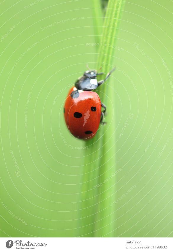 nach oben Natur grün Sommer rot Tier Umwelt Frühling Bewegung natürlich Glück klein Garten Zufriedenheit Wildtier Geburtstag