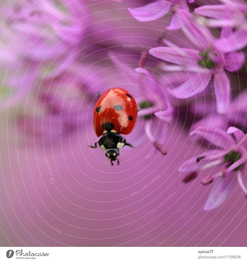 abwärtstrend Natur Pflanze Sommer Blume rot Tier Frühling Blüte Sport Glück Garten springen Wildtier frei Blühend niedlich
