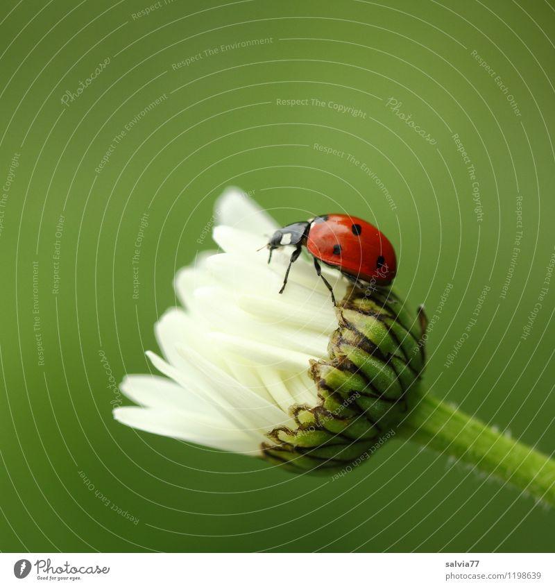 Schräglage Natur Pflanze grün Sommer rot Freude Tier Umwelt Frühling Blüte Glück klein Garten Wildtier Geburtstag Blühend