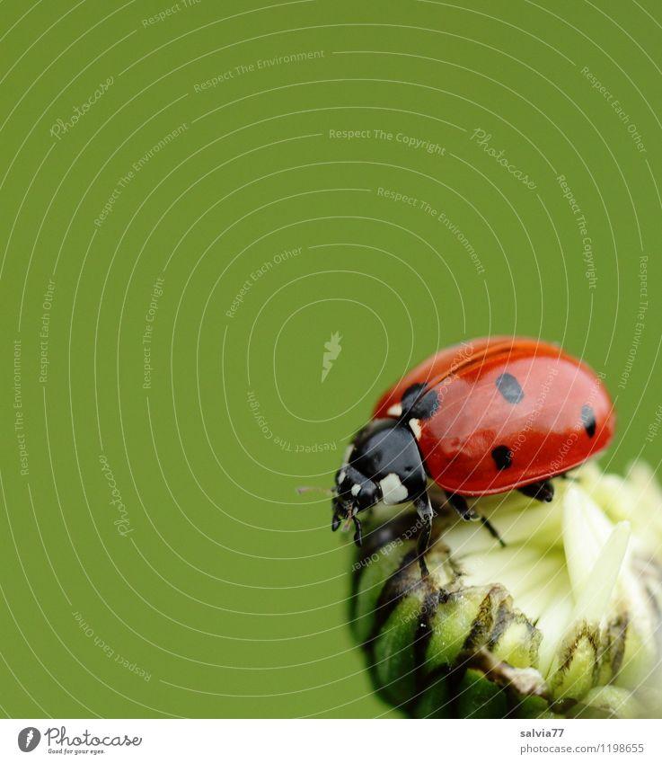 7-Punkt Natur Pflanze schön grün Sommer Blume rot Tier Frühling Blüte natürlich Glück klein Garten Wildtier authentisch