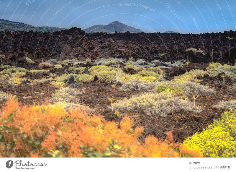 De Colores de La Palma Umwelt Natur Landschaft Pflanze Himmel Frühling Wetter Schönes Wetter Blume Sträucher Blatt Blüte Wildpflanze Hügel Felsen