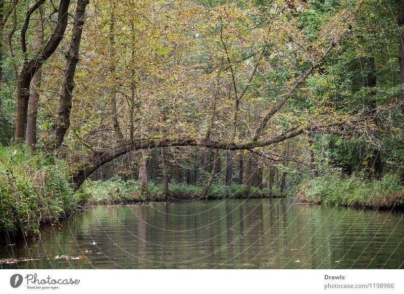 Oberspreewald Umwelt Natur Wasser Baum Wald Flussufer Moor Sumpf Spreewald Binnenschifffahrt Bootsfahrt Fischerboot Schlauchboot Ruderboot beobachten Erholung