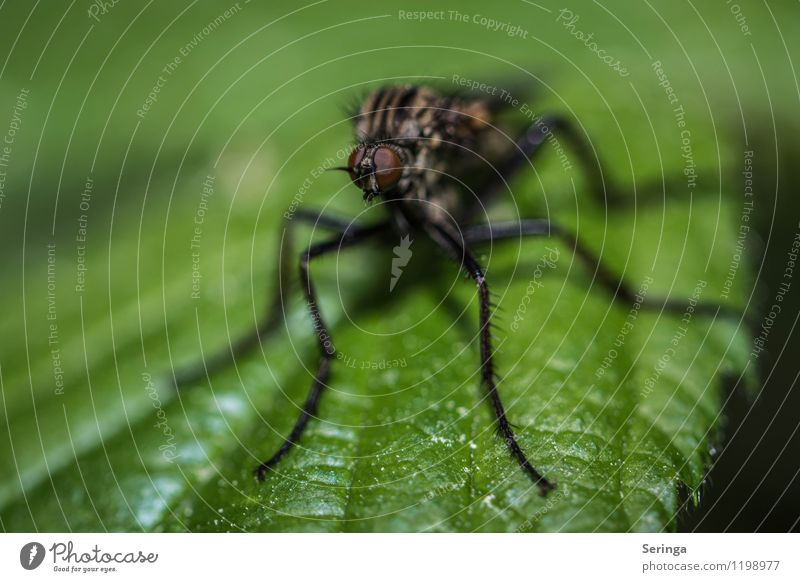 Ich seh dich 2 Tier Fliege Biene Schmetterling Käfer Tiergesicht 1 hässlich kuschlig klein neu Geschwindigkeit braun mehrfarbig gelb grau grün Farbfoto