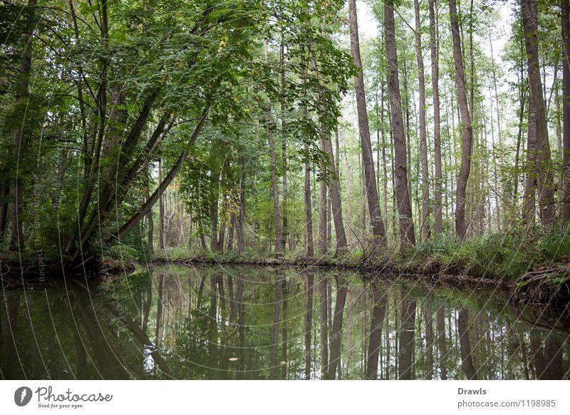 Spreewald Natur Pflanze grün Wasser Erholung Einsamkeit Landschaft ruhig Freude schwarz Herbst braun Zufriedenheit wild Idylle authentisch