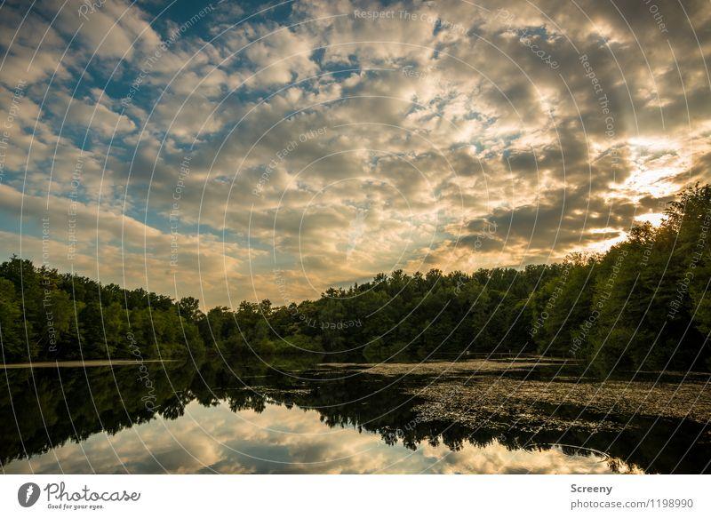 Goldene Stunde am See Natur Landschaft Pflanze Luft Wasser Himmel Wolken Sonne Sonnenaufgang Sonnenuntergang Sonnenlicht Frühling Sommer Schönes Wetter Baum