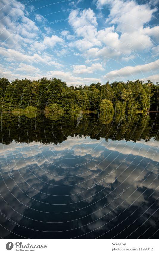 Gespiegelt... Natur Landschaft Pflanze Luft Wasser Himmel Wolken Frühling Sommer Schönes Wetter Baum Sträucher Teich See blau grün weiß Gelassenheit geduldig