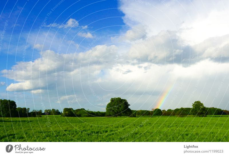 Regen bringt Segen Umwelt Natur Landschaft Pflanze Urelemente Wasser Schönes Wetter schlechtes Wetter Gewitter Wiese Feld Reinigen Umarmen Wachstum ästhetisch