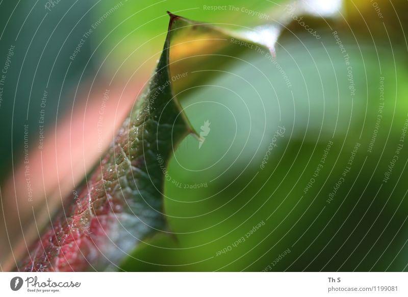 Blatt Natur Pflanze Frühling Herbst Winter Bewegung Blühend ästhetisch authentisch einfach elegant natürlich gelb grün rosa rot Gelassenheit geduldig ruhig