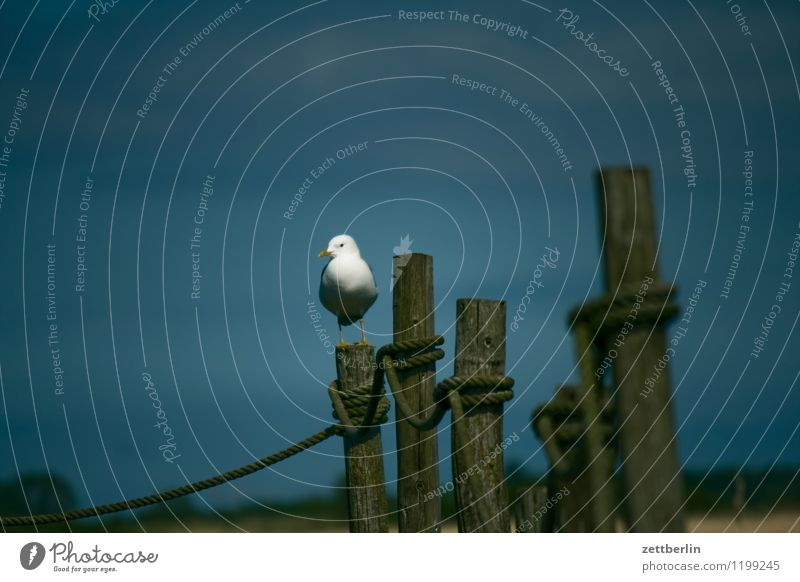 Möwe Ferien & Urlaub & Reisen Sommer Wasser Meer Einsamkeit Landschaft Reisefotografie Vogel Tourismus stehen Textfreiraum einzeln Ostsee Hafen Möwe Rügen