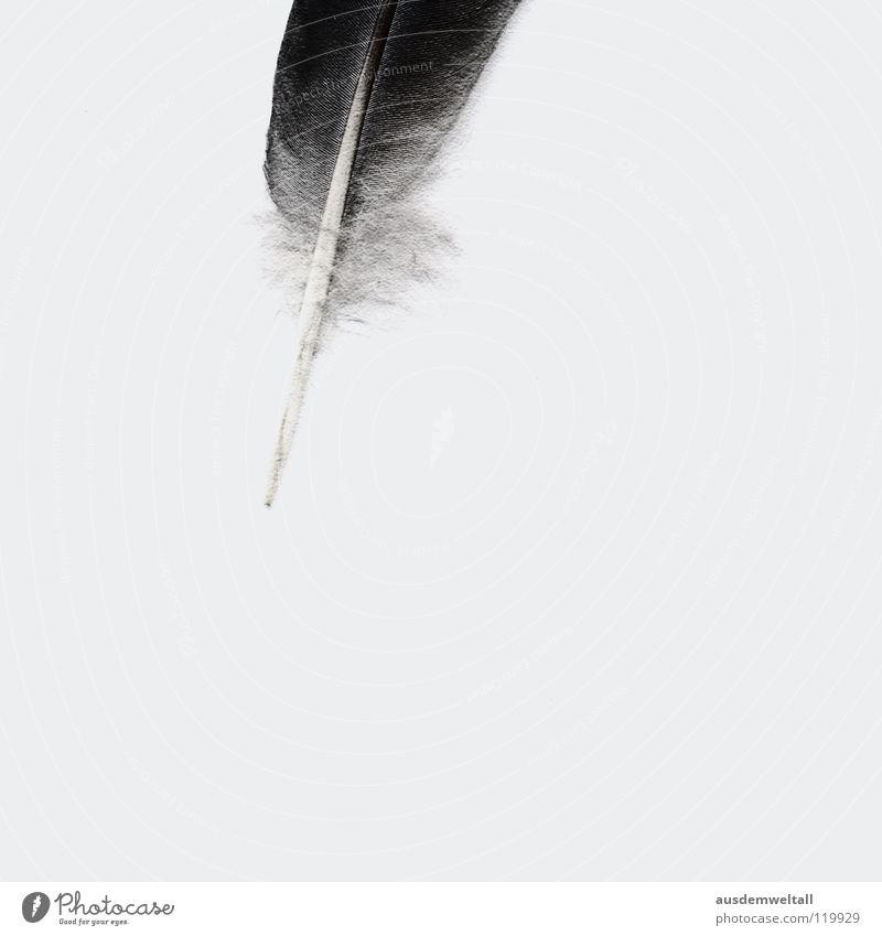 Partielle Leichtigkeit des Seins weiß schwarz Gefühle grau hell Feder analog leicht Leichtigkeit sehr wenige Scan