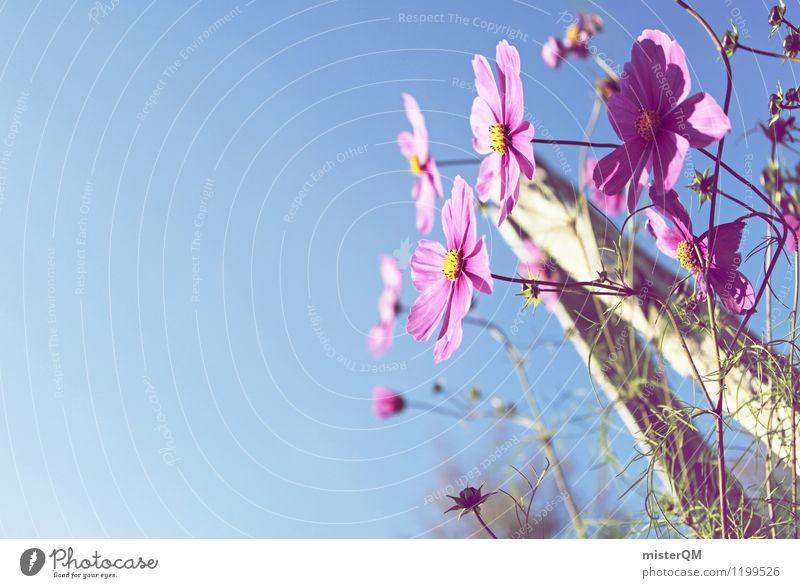 Gartenfreude. Natur Landschaft Schönes Wetter ästhetisch Zufriedenheit Blume Blumenwiese Blumenbeet violett Himmel Blüte Blütenblatt Farbfoto Gedeckte Farben