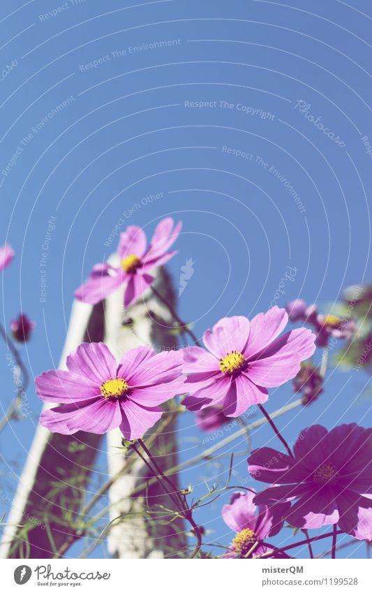 himmelan. Kunst Kunstwerk ästhetisch Zufriedenheit Blume Blumenwiese Blumenbeet Blumenstengel rosa violett Violetthimmel Blüte Blühend Farbfoto Gedeckte Farben