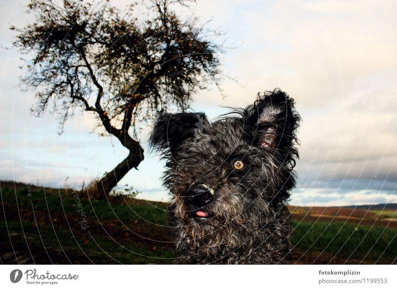 lola lonely Hund Natur Baum Landschaft Tier schwarz Leben lustig Stimmung Horizont Feld beobachten einzigartig Wachsamkeit Mut Haustier