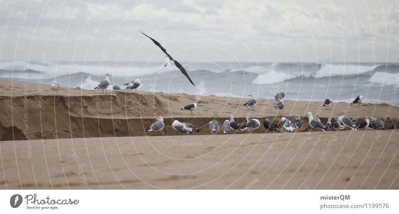 Porto-Grau. Kunst ästhetisch Zufriedenheit Möwe Möwenvögel Stranddüne Strandspaziergang Strandgut Strandleben Portugal grau schlechtes Wetter Farbfoto