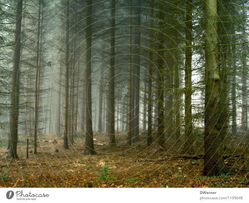 Nadelwald Natur Pflanze Baum Einsamkeit Landschaft dunkel Wald kalt Umwelt Traurigkeit Herbst Tod Angst Nebel Klima bedrohlich