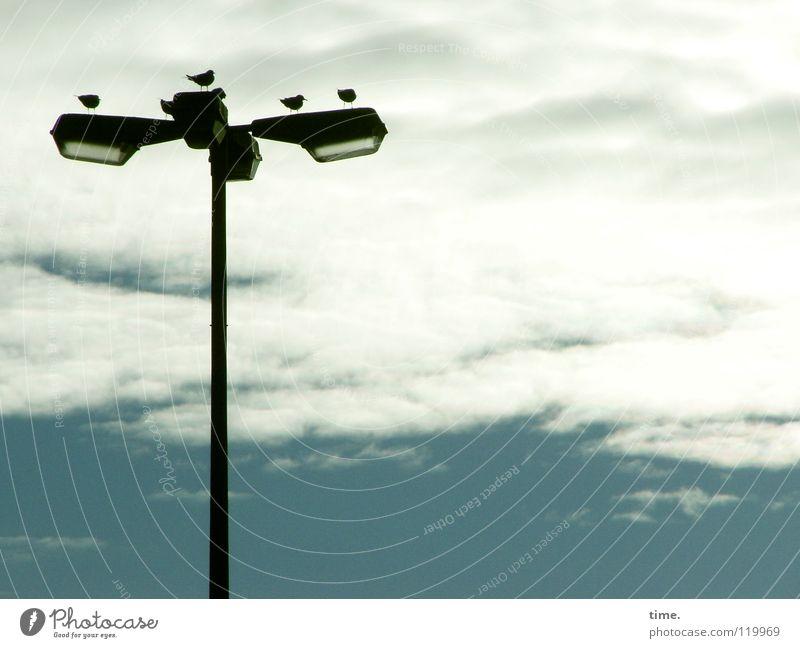 Wer fliegt mal eben 'ne Kiste Würmer holen? blau Tier Wolken Erholung Lampe Vogel Beleuchtung fliegen sitzen Sicherheit Frieden Laterne türkis ziehen Federvieh