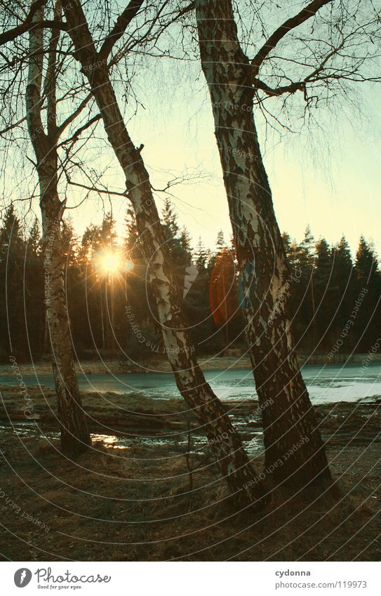 Ein Winter ohne Schnee Himmel Natur Wasser alt schön Baum Sonne ruhig Winter Einsamkeit Wald kalt Leben dunkel Landschaft Stimmung