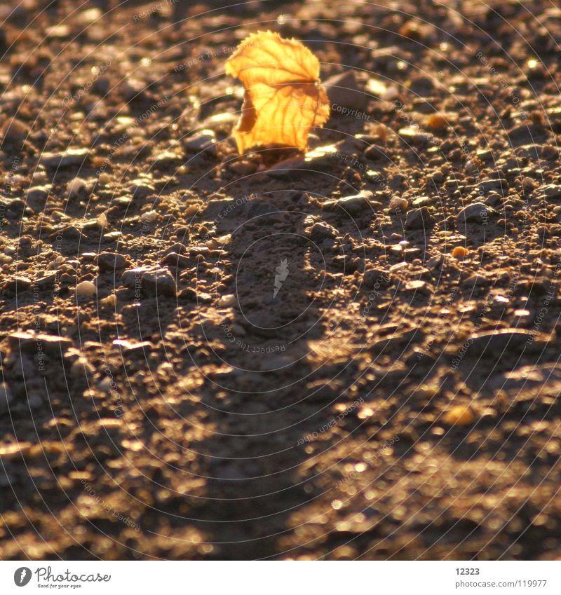 evening star Abendsonne Herbst Blatt Strahlung Vergänglichkeit ruhig Gelassenheit Kraft Zufriedenheit Trauer Verzweiflung Himmelskörper & Weltall gold