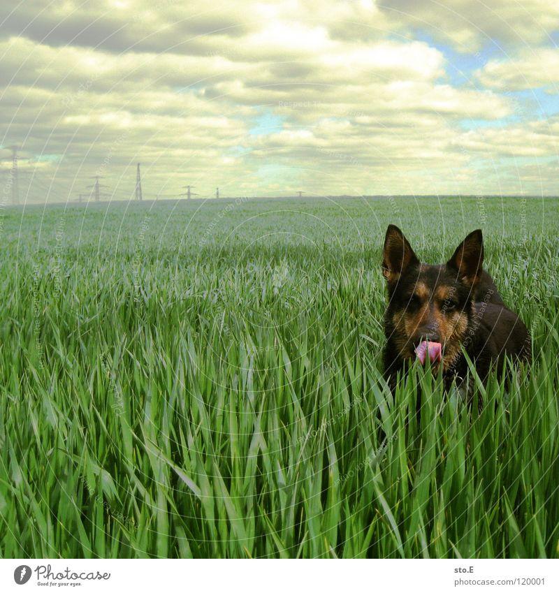 verspielt pt.1 Hund Himmel Natur blau Sonne Tier Wolken schwarz Auge Wiese Spielen Horizont braun Hintergrundbild Feld Energiewirtschaft