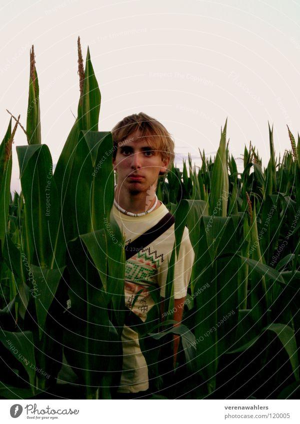 zwischendrin. Feld grün Pflanze Blatt Maiskolben Natur Amerika Außenaufnahme