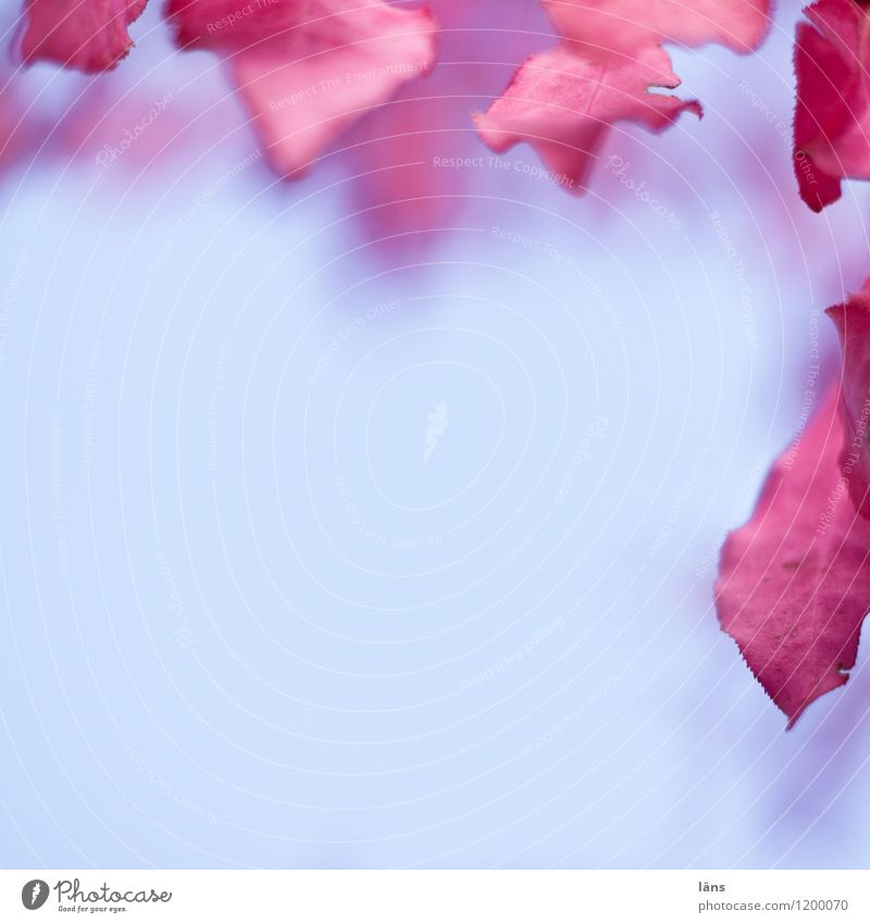 randbeReich blau rot Herbst Blätter menschenleer Randerscheinung