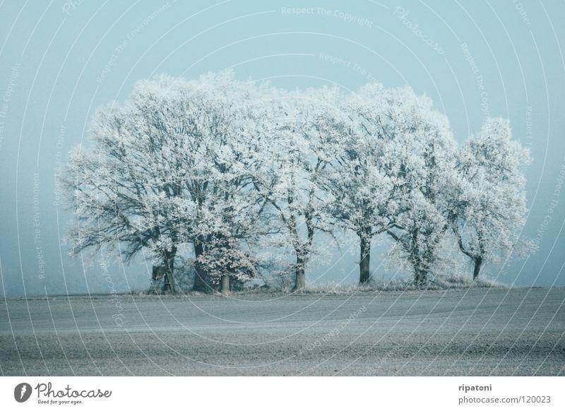 Reife Bäume im Nebel Winter Nebelstimmung Bäume im Winter Raureif Winterbäume Bäume auf einer Lichtung grua in grau stimmungsvolle Winterzeit mystische Anmutung