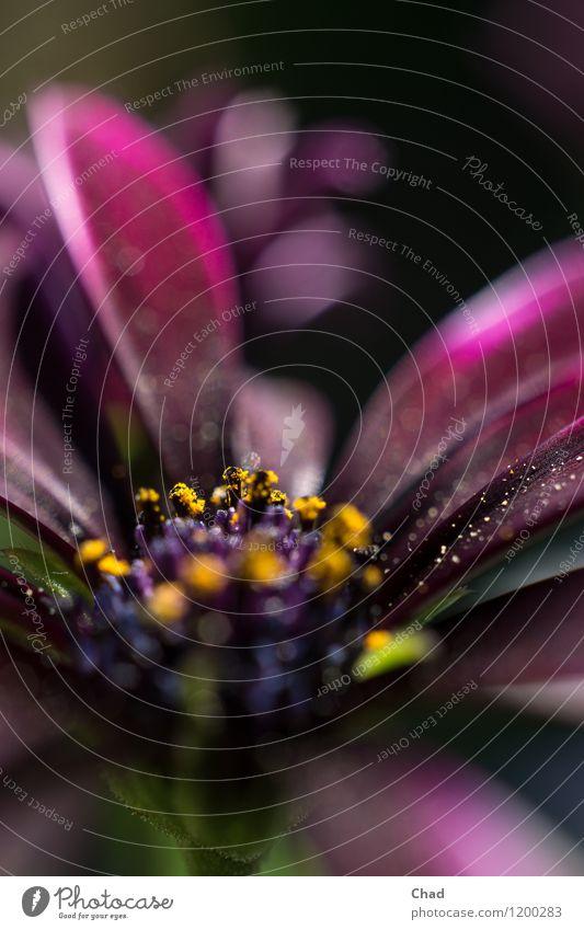 Lila Blume Garten Natur Pflanze Sommer Blick Freundlichkeit Fröhlichkeit mehrfarbig gelb grün violett Frühlingsgefühle Armut ästhetisch Farbe Blüte Staub Pollen