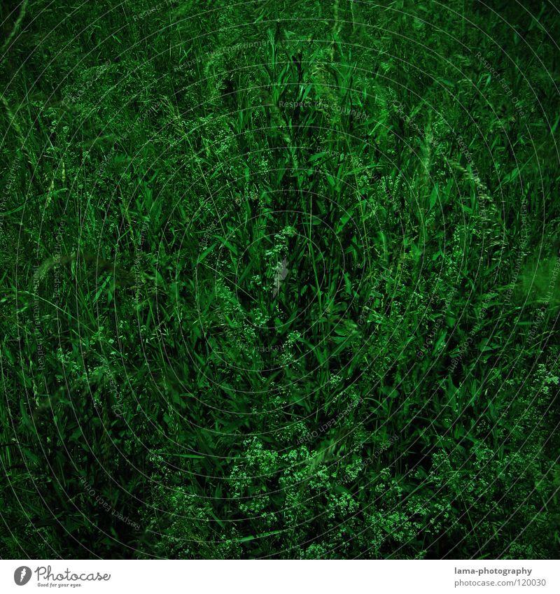 Mystical Green Blume grün Sommer dunkel Wiese Gras Frühling Feld Hintergrundbild frisch Wachstum Dekoration & Verzierung geheimnisvoll Halm mystisch gießen