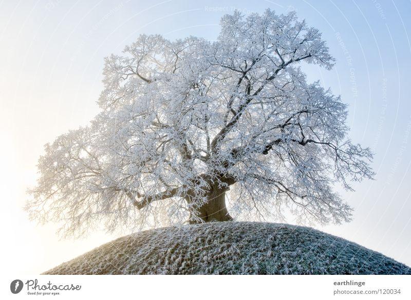 Die Dorfälteste 4 alt Himmel weiß blau Winter Einsamkeit kalt Schnee Berge u. Gebirge orange Nebel Ast Vergänglichkeit Hügel Baum Ruhestand
