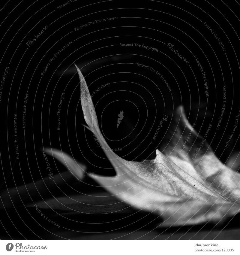 Bote des Herbst Blatt Faser Licht Schwarzweißfoto Makroaufnahme Nahaufnahme Natur Bodenbelag Baustelle Leben Tod Schatten
