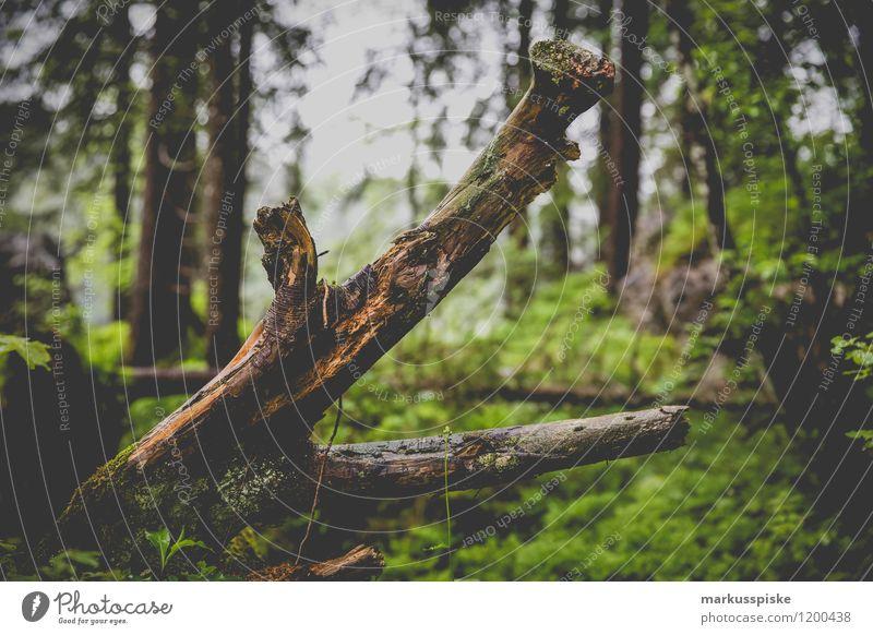 totholz biotop Freizeit & Hobby Ferien & Urlaub & Reisen Tourismus Ausflug Abenteuer Ferne Freiheit Expedition Sommerurlaub Berge u. Gebirge Pflanze Baum Gras