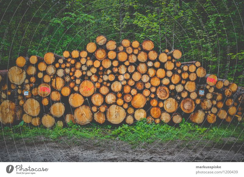 holzernte Natur Ferien & Urlaub & Reisen Pflanze Baum Landschaft Wald Berge u. Gebirge Tourismus Wachstum Ausflug Abenteuer Baumstamm Alpen Sommerurlaub